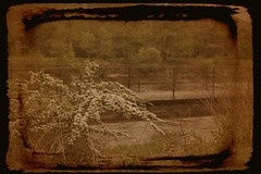 Un petit pont (photophil16) Tags: nature metal pont passage vieille ancien fleuve acier passerelle eux