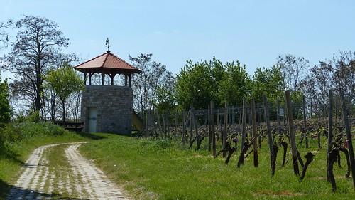 Weinbergwanderung bei Harxheim
