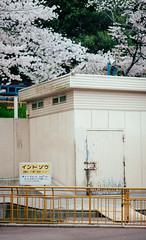 2016.4.6: Ikeda Zoo (Nazra Zahri) Tags: animal japan zoo spring raw sakura cherryblossoms hanami okayama 2016 ikedazoo vscofilm 20160406