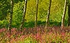 Natural Art (RoystonVasey) Tags: park sculpture west canon eos hall zoom yorkshire usm 70300mm bretton ysp 400d