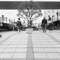 160424_ZenzaBronicaS2_001 (Matsui Hiroyuki) Tags: fujifilmneopan100acros zenzabronicas2 zenzanon150mmf35 epsongtx8203200dpi