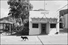 Dentist & The Dog (greenschist) Tags: arizona usa dog film analog superior dentist canonae1program canonfd50mmf18sc fomaretropansoft320