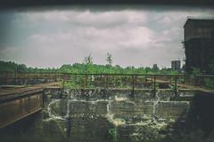 Ob man da noch berall lang gehen sollte? (benni_sc) Tags: old duisburg bume industrie landschaftsparknord gewirr verwachsen