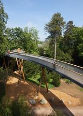 _Shannon on the Bridge_DSC06718 (Ian Gearing) Tags: park uk trees england west nature woodland arboretum gloucestershire westonbirt trust glos