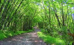 IMG_0021x (gzammarchi) Tags: strada italia natura montagna paesaggio monti bosco sterrato firenzuolafi