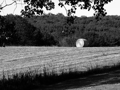rotoballe in the evening (3) (Ange 29) Tags: trees bw canada king olympus fields hay bales township omd em1 zd 35100mm