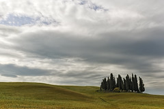 Zypressenhain, San Quirico (Wolfgang.Grilz) Tags: italien landscape italia unesco tuscany siena montalcino pienza montepulciano toscana valdorcia toskana sanquirico tuscanlandscape tuscanspring springitaly