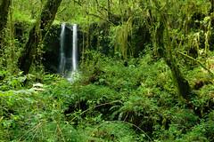 Wasserfall im Regenwald (zanettifoto) Tags: kilimanjaro wasserfall bach wald moshi baum farn moos langzeitbelichtung tansania regenwald kilimandscharo tza