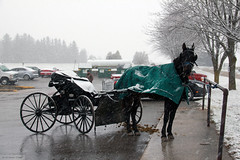 Mennonite horse buggy (Canadian Pacific) Tags: winter horse snow ontario canada rural restaurant countryside baker canadian buggy millbank mennonite wintery 4060 annamaes aimg9483 perthline72