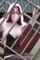 Spidergwen (3) (Dezmin) Tags: man photography spider cosplay spiderman marvel gwen lilium slippery supanova spidergwen