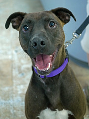 Axel_03 (AbbyB.) Tags: dog pet animal newjersey canine doggy shelter shelterpet petphotography easthanovernj mtpleasantanimalshelter