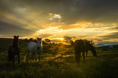 Sunset and horses (erfey07) Tags: infinitexposure ngc saariys quality pictures gallery flickrtravelaward nikonflickraward horses clouds sun light nature wow