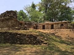 IMG_1958 (tomboy501) Tags: mexico maya guatemala mayanruins chiapas yaxchilan usumacintariver