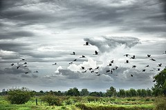 Low flying (Tungmay (Keep Calm and Take Photos)) Tags: sky nature birds clouds landscape thailand flying nikon lowflying