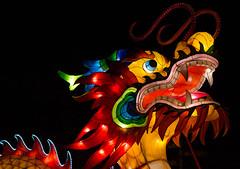 _DSC9763_2 (Elii D.) Tags: light fish flower animal night zoo monkey neon dragons lantern lampion dargon