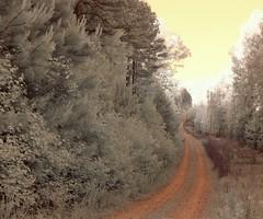 Curious Deer (Neal3K) Tags: wood georgia ir drive woods soft deer dirt curious softlight infraredcamera henrycountyga kolarivisionmodifiedcamera