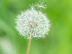 20140503_16579.jpg (jonas_oelke) Tags: orte zingst fotokurs makrofotografie fotoworkshop diemagiederkleinendinge
