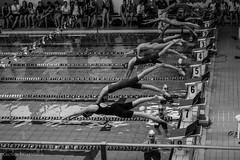 Pronti.....via ! (paolotrapella) Tags: bw water piscina acqua bianco nero nuoto atleti competizione canoneos600d