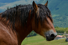 _DSC4138 (allabar8769) Tags: caballo paisaje cantabria portilladelasia