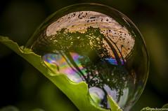 Reflections (serbosca) Tags: bubbles macromondays