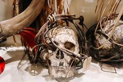 QF4C7693 (leslilundgren) Tags: skull bones pittriversmuseum