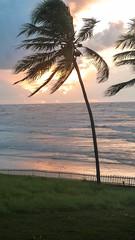 P1100215 (Carlos A. Nascimento) Tags: coconuttree palm beach dawn sunrise alvorada amanhecer praia coqueiro sergipe barradoscoqueiros cu sky
