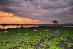 Weerawila Lake - The Colour Purple (Drriss & Marrionn) Tags: travel blue trees sunset red sea sky cloud lake plant colour tree water field clouds landscape asia purple bright outdoor wetlands serene srilanka ceylon uva grasslands hyacinth southasia uvaprovince weerawilalake