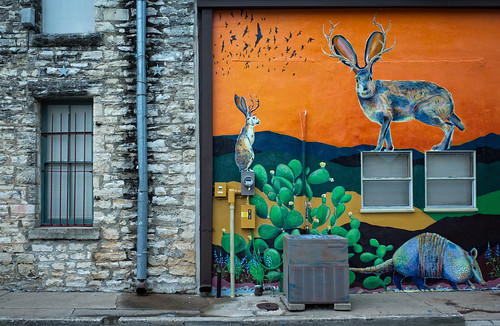 street blue cactus urban orange brick rabbit green window birds wall graffiti bars painted pipes urbanart airconditioner sidewalk pricklypear drainpipe armadillo ricohgr electricalmeters anneworner