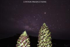 IMG_9757 copy (Aaron Lynton) Tags: canon silver way stars long exposure sigma haleakala crater swords silversword milky milkyway lyntonproductions