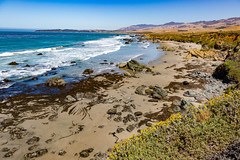 7P7A2631 (Mark Ritter) Tags: ocean flowers water landscape coast highway rocks pacific pch
