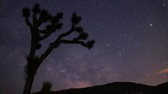 Joshua Tree at Night 2 (arthurcauty) Tags: california nightphotography travel sky usa nature silhouette night america stars landscape star joshuatree nightsky joshuatreenationalpark arthurcauty