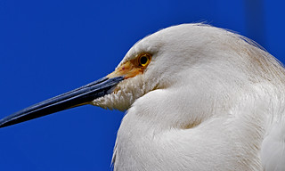 white on blue