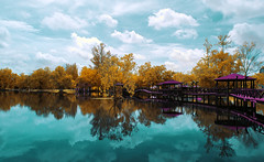 [INFRARED] Tasik Melati - The Series (mozakim) Tags: bridge autumn trees sky cloud lake reflection nature water garden landscape ir nikon day infrared perlis d90 tasikmelati