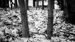 The Trap (memories-in-motion) Tags: bw zeiss forest hidden schwarzweiss wald weiss trap falle pancolar schwart