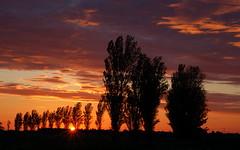 The sunset behind the poplar trees - series (Kirkleyjohn) Tags: trees sunset sky sun silhouette clouds atardecer treesilhouette countryside suffolk sonnenuntergang silhouettes pôrdosol sunsetlight lowestoft poplars coucherdusoleil gisleham treesilhouettes treessilhouettes