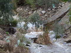 Small Log Jam (mikecogh) Tags: winter wet rain creek log weeds gushing michaelperryreserve