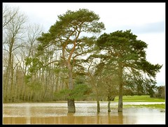 wellwatered (Ian's Art....) Tags: trees rural downs saturated flood outdoor colourful iansart d60vr1855 lexar8gb