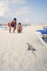 Iguana Playera (elvira boix) Tags: summer beach mexico diego playa iguana verano pepe rivieramaya