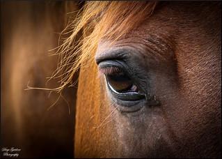 L'occhio del cavallo