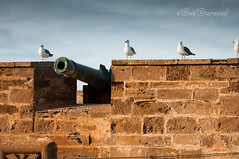 Essaouira (David Azurmendi) Tags: africa travel people seagulls david port cat photography gente viajes gato fortaleza medina fotografia marruecos gaviotas essaouira skala viajar marroco azurmendi caones
