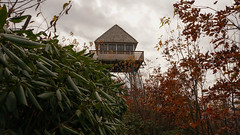 Green Knob Lookout Tower Photo