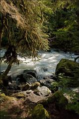 Nooksack River-058 (gmomada) Tags: mountains washingtonstate northerncascades nikond90