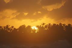 ... a brand new day (mariola aga) Tags: ocean thanksgiving trees light summer sky orange sun sunlight beach water silhouette closeup clouds sunrise golden glow dominicanrepublic shoreline wave palmtrees 75300mm tones atlanticocean puntacana ruby3 thegalaxy abrandnewday hardrockhotelcasino rubyphotographer mygearandme mygearandmepremium mygearandmebronze ruby10 ruby15 ruby20 vigilantphotographersunite vpu2 vpu3 vpu4 vpu5 vpu6 vpu7 vpu8 vpu9 vpu10