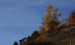 Randonnaz9 (bulbocode909) Tags: nature jaune automne rouge suisse bleu ciel arbres valais fully montagnes randonne