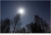 De maan en jupiter (5D319374) (nandOOnline) Tags: bomen nederland natuur sirius orion jupiter peel hemel limburg landschap ster maan stier sterren planeet sterrenbeeld maanlicht grootepeel sterrenbeelden ospeldijk
