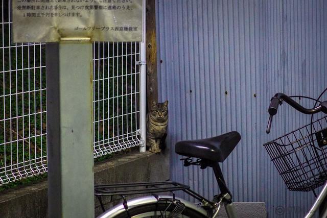 Today's Cat@2014-01-16