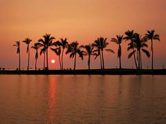 IMG_3554 (heartinhawaii) Tags: sunset silhouette palms hawaii hawaiian hawaiiansunset bigisland fishpond abay anaehoomalubay hawaiisunset kohalacoast hawaiiisland southkohala bigislandsunset canons90 kuualiifishpond kuualii bigislandinfebruary hawaiiinfebruary