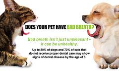 1800PetsAndVets Pet Dental Care http://1800PetsAndVets.com/ (1800PetsAndVets.com) Tags: pets badbreath dentalcare