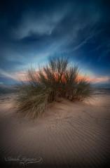 Desert plant (Ibrahim.Alghamdi) Tags: blue sky green landscape dessert saudi jeddah     tonemapped     mastorah