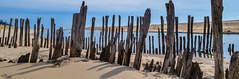 5/2/14 (Anika2061) Tags: sand bluesky lakemichigan weathered oldpier puremichigan